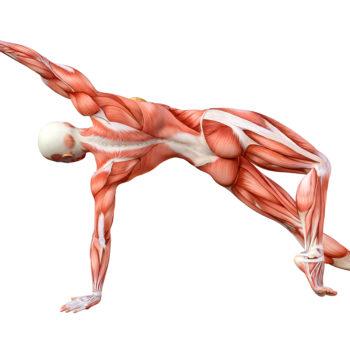 académie de l'inspiration formation stage immersion retraite méditation yoga réflexologie plantaire compétences professionnelles évaluation méthode apprentissage muscles tendons fascia douleur fibre musculaire conscience chakra blocage trimurti traumatologie